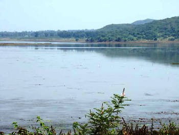 Sara Lake